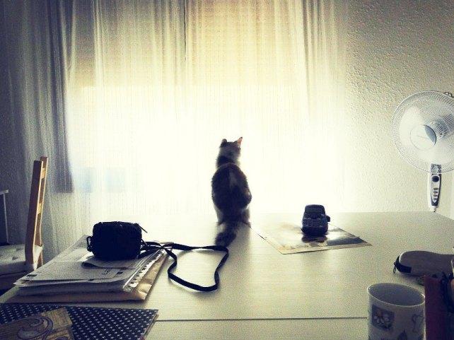 Khalessi the Scraping Cat 2