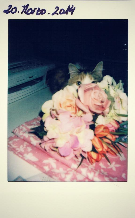 Polaroid Khalessi Primavera